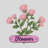 Plantas de las flores con los pétalos y las hojas de la naturaleza stock de ilustración