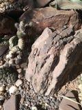 Plantas de las grasas entre las rocas Imagen de archivo libre de regalías
