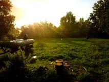 Plantas de los árboles de hierba del sol de la lluvia fotografía de archivo libre de regalías