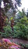plantas de los árboles de plátano hermosas foto de archivo