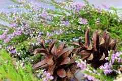 Plantas de madera naturales Imagenes de archivo