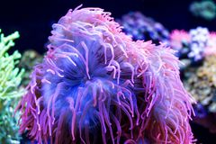 Plantas de mar subaquáticas muito coloridas foto de stock