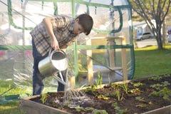 Plantas de morango molhando do menino Fotos de Stock