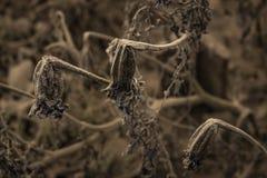 Plantas de morte fotografia de stock