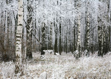 Plantas de neve na floresta do outono Imagem de Stock