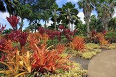 PLANTAS DE PIÑA HAWAII fotografía de archivo libre de regalías