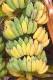 Plantas de plátano Imágenes de archivo libres de regalías