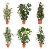 Plantas de potenciômetro fotografia de stock royalty free