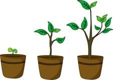 Plantas de potenciômetro Imagem de Stock