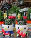 Plantas de potenciômetro bonitas Fotos de Stock Royalty Free