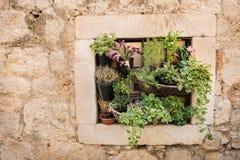 Plantas de potenciômetro na parede - ideia de jardinagem do espaço pequeno Imagens de Stock