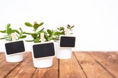 Plantas de potenciômetro pequenas com as etiquetas vazias do nome Fotografia de Stock Royalty Free