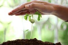 Plantas de protección de la mano Imagen de archivo libre de regalías