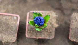 Plantas de rellenado en el jardín Fotografía de archivo libre de regalías
