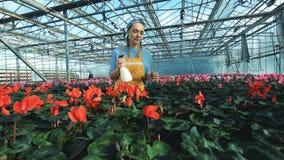 Plantas de riego del trabajador del invernadero en los potes, industria de la agricultura almacen de metraje de vídeo