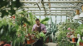 Plantas de riego masculinas confiadas del jardinero en el invernadero con la poder El hombre joven atractivo disfruta de su traba imagen de archivo libre de regalías