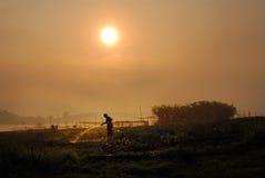Plantas de riego por la mañana. Foto de archivo