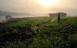 Plantas de riego por la mañana. Foto de archivo libre de regalías