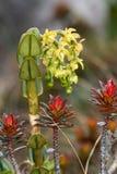 Plantas de Roraima foto de archivo libre de regalías