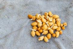 Plantas de semillas Fotos de archivo libres de regalías