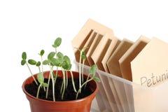 Plantas de semillero Imagenes de archivo