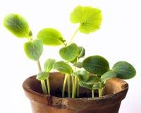 Plantas de semillero Imágenes de archivo libres de regalías