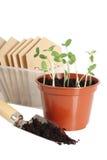Plantas de semillero en crisol Imágenes de archivo libres de regalías