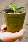 Plantas de semillero en crisoles Imagenes de archivo