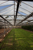 Plantas de semillero en invernadero Imagen de archivo