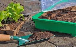 Plantas de semillero en mini invernadero Fotos de archivo libres de regalías