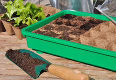 Plantas de semillero en mini invernadero Foto de archivo