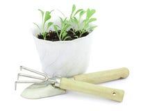 Plantas de semillero jovenes de flores en crisoles brillantes Fotos de archivo libres de regalías