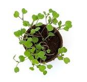 Plantas de semillero Potted 1 Fotos de archivo