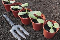 Plantas de semillero vegetales en crisoles Fotos de archivo