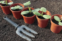 Plantas de semillero vegetales que crecen en crisoles en resorte Fotos de archivo libres de regalías
