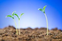 Plantas de semillero verdes - nuevo concepto de la vida fotos de archivo libres de regalías