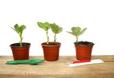 Plantas de semillero y herramientas Fotografía de archivo libre de regalías