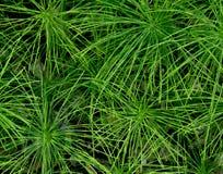 Plantas de Starburst Foto de archivo libre de regalías