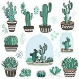 Plantas de Succulente