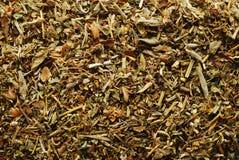Plantas de té Fotografía de archivo libre de regalías