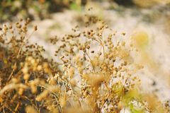 Plantas de Tejas en paisaje imagen de archivo libre de regalías