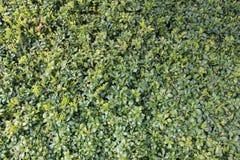 Plantas de tierra verdes de la cubierta Imagen de archivo libre de regalías