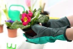 Plantas de tiesto de la primavera Fotos de archivo