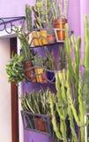 Plantas de tiesto del cactus fotos de archivo libres de regalías