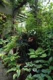 Plantas de tiesto en el lugar del jardín de la sombra Foto de archivo
