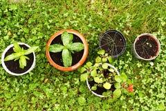 Plantas de tiesto en la foto del primer del fondo del césped Fotos de archivo libres de regalías