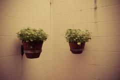 Plantas de tiesto en la pared Fotografía de archivo libre de regalías