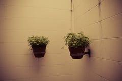 Plantas de tiesto en la pared Foto de archivo libre de regalías
