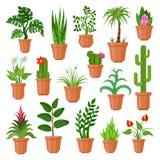 Plantas de tiesto de la casa ilustración del vector