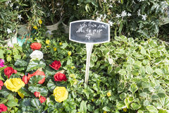 Plantas de tiesto rojas y amarillas de florecimiento en un mercado en París, Francia Fotografía de archivo libre de regalías